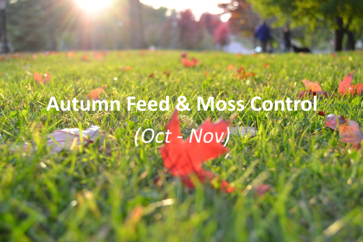 Autumn feed and moss control