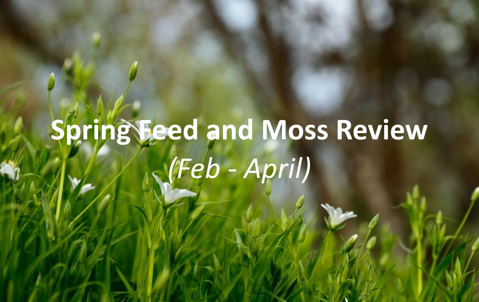 Spring feed and moss review