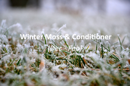 Winter moss and conditioner